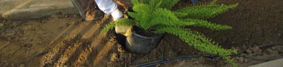 7/14/12: SCE & Habitat Volunteers