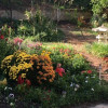 University of Redlands & RCC Students Transform Yard for 100 Year Old Riverside Resident
